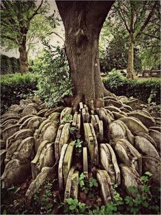 Hundreds of old gravestones circle The Hardy Tree in London. Read more about it here: https://www.facebook.com/TheChirurgeonsApprentice/photos/a.176574612382801.40579.175785682461694/820837914623131/?type=1&theater … pic.twitter.com/7LaNZbTT9F