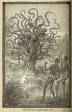 Man-eating tree can refer to any of various legendary or cryptid carnivorous plants that are large enough to kill and consume a person or other large animal.