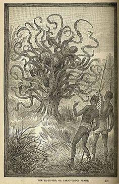 Descripción de un nativo siendo devorado por un Yateveo, un árbol carnívoro de América Central de Land and Sea de J.W. Buel, 1887.