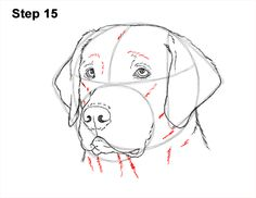 Learn how to draw the details of a Labrador Retriever Head with this how-to video and step-by-step drawing instructions. Animal Drawings, Pencil Drawings, Art Drawings, Dog Pencil Drawing, Dog Drawing Tutorial, White Labrador, Handmade Dog Collars, Dog Paintings, Step By Step Drawing