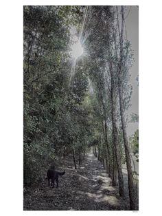 LX who walks who asks paco the dog@elloiphoneography @ellomobilephoto…