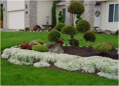 Plants that tolerate foot traffic Red Creeping Thyme, Thymus Serpyllum, Plants For Raised Beds, Snow In Summer, Patio Planters, Covered Garden, Ground Cover Plants, Moon Garden, White Gardens