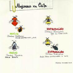 """Infografía a mano rápida para la iniciativa """"Moscardón Revive"""" #chile #moscardon #abejas #abejorros #valdivia #moscardonrevive #wildlife #infographic #design #sketch #painting"""
