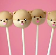 Boo the world's cutest dog cake pops!  OMG
