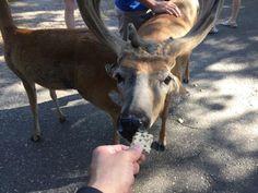 Photo of Wisconsin Deer Park