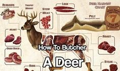 How To Butcher A Deer. This great infographic that shows you where to get the different cuts of meat from. Butchering is becoming a lost skill set.