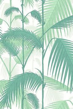 Cole & Son -  Contemporary Restyled - Palm Jungle Wallpaper - Green 951002