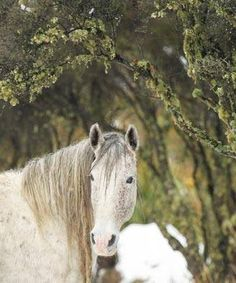 Kaimanawa stallion photographed in the wild before being mustered (Kelly Wilson) Beautiful Horse Pictures, Beautiful Horses, Wilson Sisters, All About Horses, Text On Photo, All The Pretty Horses, Horse Photography, Horse Head, Donkeys