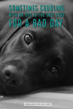 Dog Quote - Sometimes cuddling with my dog... Dog, Dog Quotes Inspirational Quotes, Funny Quotes, Life Quotes