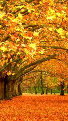 Autumn Trees by lucille