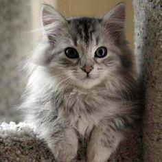 Fluffy Pretty Kitty <3 <3 <3