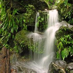 Dominica, an island in the Caribbean with a rainforest and beach. Definitely would be a wonderful place to go for a honeymoon. :)