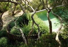 Love the circular fence line. Fiona Brockhoff garden - Sorrento by proteamundi