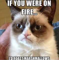 Sure, I'm not going to deny that I like Tarder Sauce, the Grumpy Cat. Or, I should say that I appreciate the memes that sprang up around this cat's…interesting likeness. I think I…