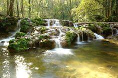 ✿Bruits de la Forêt Rivière & Oiseaux. Relaxation Bien-Etre. Nature pour...
