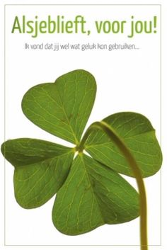 Keep the Luck o' the Irish With You Year Round: How to Preserve a Four Leaf Clover! George Bernard Shaw, St Patrick's Day Crafts, Crafts To Make, Happy B Day, Make Me Happy, Mothers Day Pictures, Four Leaves, Luck Of The Irish, Craft Activities For Kids
