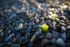 On the seashore. by Tina Cherkasova on 500px