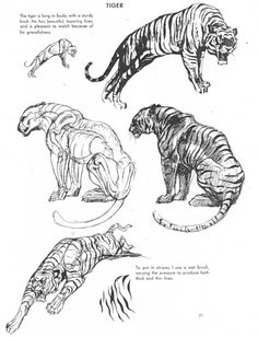 "zoocanvas: "" From The Art of Animal Drawing by Ken Hultgren "" kitties"