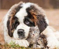 Cute Baby Animals, Animals And Pets, Funny Animals, Cute Animal Pictures, Dog Pictures, Kittens Cutest, Cute Cats, Cute Puppies, Dogs And Puppies
