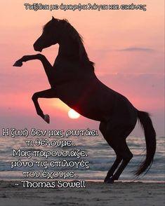 Horses, Animals, Motorbikes, Animales, Animaux, Animal, Animais, Horse