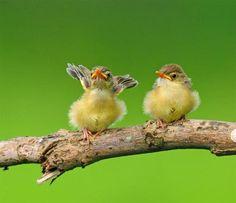 I'm so fly. :)