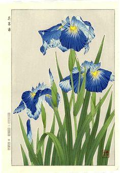 KAWARAZAKI SHODO Japanese Woodblock Print BLUE IRIS 1954 | eBay
