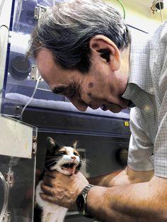 死亡する前日のたま。動物病院で、和歌山電鉄の小嶋光信社長に体をなでられ、「ニャー」と声を振り絞ったという=両備グループ提供