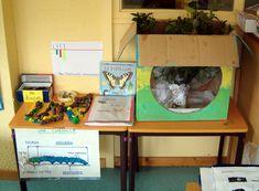 Compte-rendu élevage de chenilles en maternelle