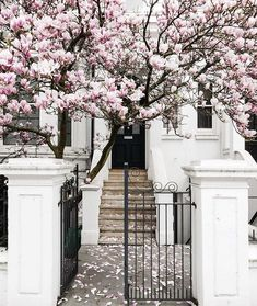 London Fine Art Photography Magnolia, Notting Hill Notting Hill, London in spring is a glorious sight! This magnificent magnolia greeted me on a Beautiful Flowers, Beautiful Places, Foto Top, Spring Aesthetic, Tulips Garden, London Tours, London Decor, Spring Photography, Art Photography
