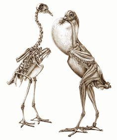 The Unfeathered bird 3