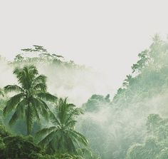 Green Valley, Tropical Paradise, Palm Trees, Island, Color Themes, Nature, Cottage, Songs, Beach