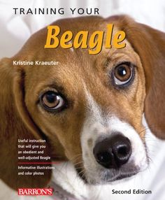 Training Your Beagle (Training Your Dog Series) by Kristine Kraeuter http://www.amazon.com/dp/0764145924/ref=cm_sw_r_pi_dp_WIHfvb0WAVJFT