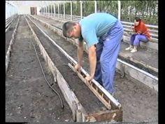 Овощеводство по Миттлайдеру 10 - Выращивание помидор - YouTube