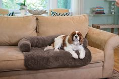 Your pet deserves maximum comfort - and you deserve to keep your furniture clean! The Ultra Plush Pet Bed & Furniture Protector keeps your furry friend warm and comfortable while at the same time protecting your furniture. Furniture Covers, Bed Furniture, Pet Beds, Dog Care, Fur Babies, Your Pet, Pet Supplies, At Least, Pet Stuff
