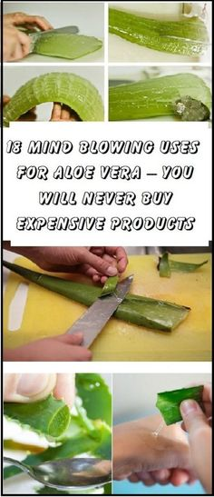 18 Mind blowing uses for aloe vera – you will never buy expensive products again!