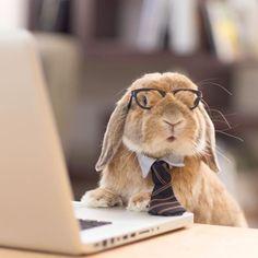 Este coelho é tão elegante que ele tem o seu próprio estilista e fotógrafo…