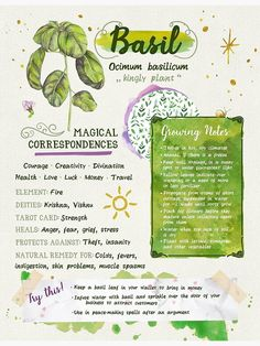 'Basil Grimoire Page' Poster by tysmiha - - Millions of unique designs by independent artists. Find your thing. Witchcraft Books, Green Witchcraft, Witchcraft Herbs, Magic Herbs, Herbal Magic, Healing Herbs, Natural Healing, Healing Spells, Witch Herbs