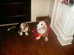 Super Hounds Baxter and Fred