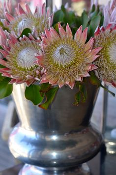 King Protea Suid Afrika - would love this arrangement in my home! Protea Art, Protea Flower, My Flower, Flower Power, Protea Wedding, Wedding Bouquets, Wedding Flowers, Out Of Africa, West Africa