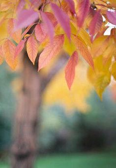 Find images and videos about autumn, fall and trees on We Heart It - the app to get lost in what you love. Soft Autumn, Autumn Day, Autumn Leaves, All Falls Down, Bokeh Photography, Autumn Scenery, Seasons Of The Year, Fall Harvest, Graphic