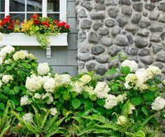 Great companion plantings for hydrangeas. | thisoldhouse.com