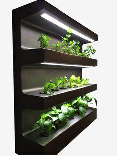 Lubisz dodawać do swoich potraw świeże oregano, bazylię, czy tymianek? Jeśli tak, to zobacz jaką półkę z ziołami możesz mieć w swoim domu. Dzięki poniżej prezentowanemu rozwiązaniu możesz mieć na ścianie codziennie świeże zioła. Będą one domowe, dlatego możesz mieć pewność, że nie ma w nich zbędnej chemii i innych ulepszaczy. Trzeba tylko znać podstawowe …