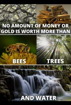 Bee Facts, Climate Change, Waterfall, Environment, Nature, Outdoor, Positive Vibes, Thoughts, Blue