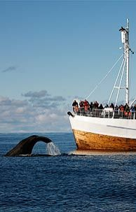 Vesterålen, whale safari. Norway...one of my goals is to go whale watching!!
