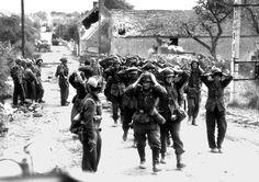 German soldiers surrender to Canadians at Saint-Lambert-sur-Dive, August 1944.