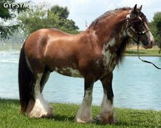 Own a beautiful draft horse..or several horses!!