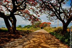Estrada - Flona Ipanema