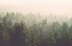 amidst-the-mist-forest-plain