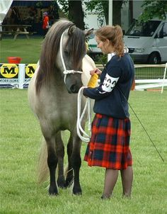 highland pony show | photos from the Royal Highland show Highland pony classes