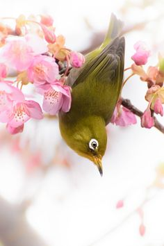 BIRD --Japanese Whiteeye.